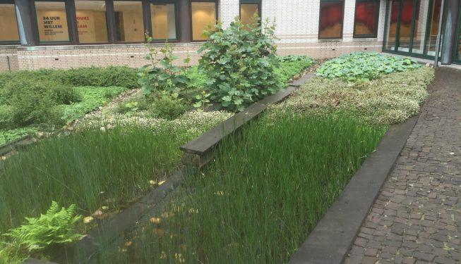 Tuinonderhoud Den Haag